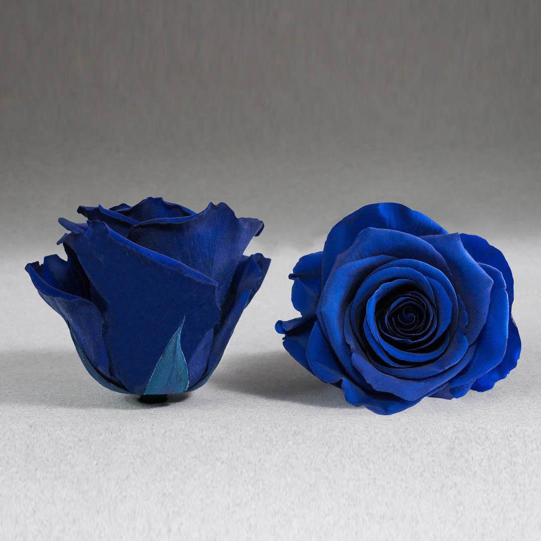 Trandafir criogenat albastru electric Giftbox